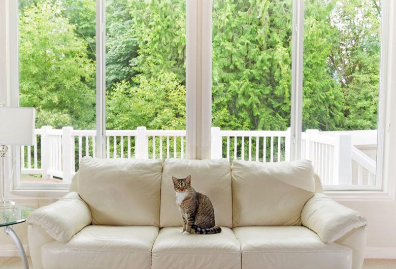 Vue d'un intérieur avec un chat sur le canapé, volets ouverts